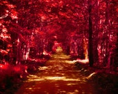 Autumn leaves, dark red, crimson, red and black, earthtones, brown, red forest, nature photography, enchanted forest, canopy of leaves