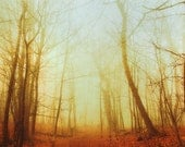 Tree photography, autumn forest, falling leaves, fall photograph, burnt orange, honey gold, woodland photo, walk in the woods