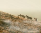 Wild horses, horse art, Horse photography, nature photography, animal photo, neutral colors, earthtones, rustic decor, mocha