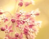 Flower photograph, mustard yellow, amber, honey gold, honeysuckle pink, shabby chic, cottage, bokeh, garden photograph