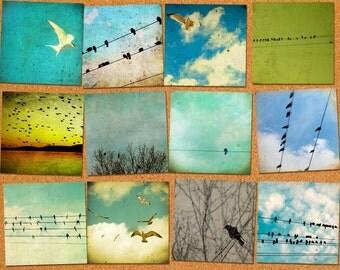 Bird art, bird prints, bird photos, avian art, tweet, set of bird prints, postcard size, bird print set, bird on wire, seagull photo