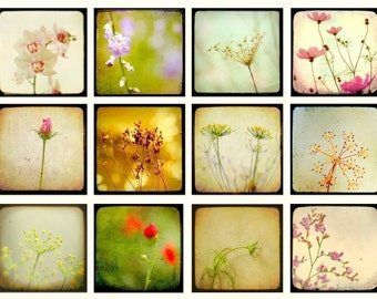 Nature photography, flower photos, TTV print set, pastel, print collection, honey gold, set of small prints Set of 12 4x4 prints