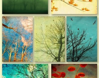 Tree photography autumn decor  harvest gold pale green crimson clouds green accent  - Set of 7 4x6 prints