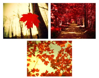Autumn photography, fall photos, cranberry, thanksgiving, forest, tree, red maple leaves, fall foliage, ruby, Set of 3 8x10