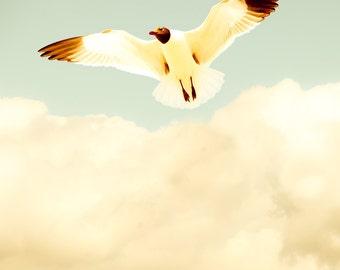 Summer photography, bird print, seagull, coastal, fresh mint green, Virginia, beach photography, neutrals, cream, harvest gold