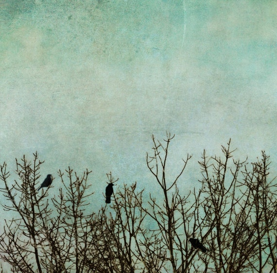 Quarry green, birds in tree, black bird, art print, nature photograph, wall art, Nature Photo, teal accent, crows, bare tree, autumn