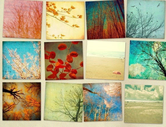 Home decor,  nature photos, set of prints, art collection, trees, leaves, forest, woodland,   autumn : Looking Up 12 5x5 prints