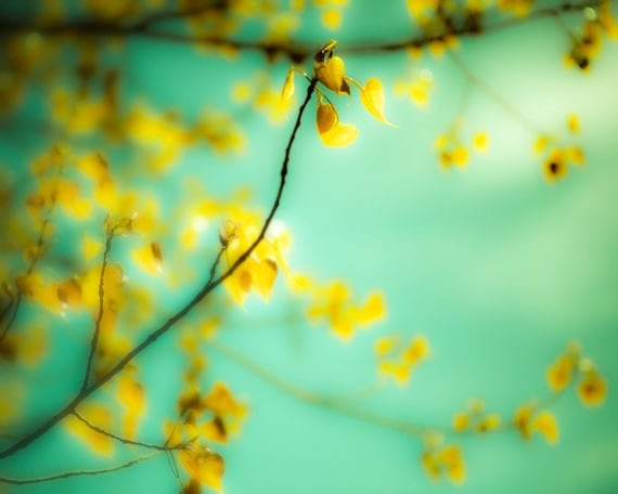 Nature photography, Lemon yellow, yellow leaves, blue green, aqua, pastel, turquoise, dreamy, summer decor, citrus, hearts,