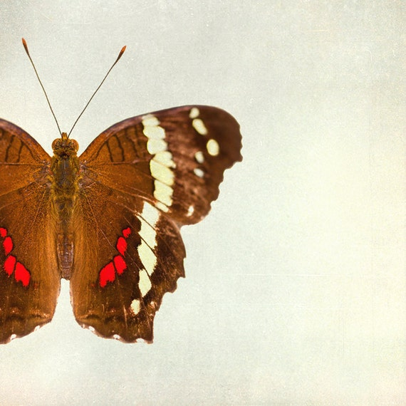 Summer butterfly, brown, white, red, animal print, lepidoptera, geekery, insect macro photo : Rusty 5x5