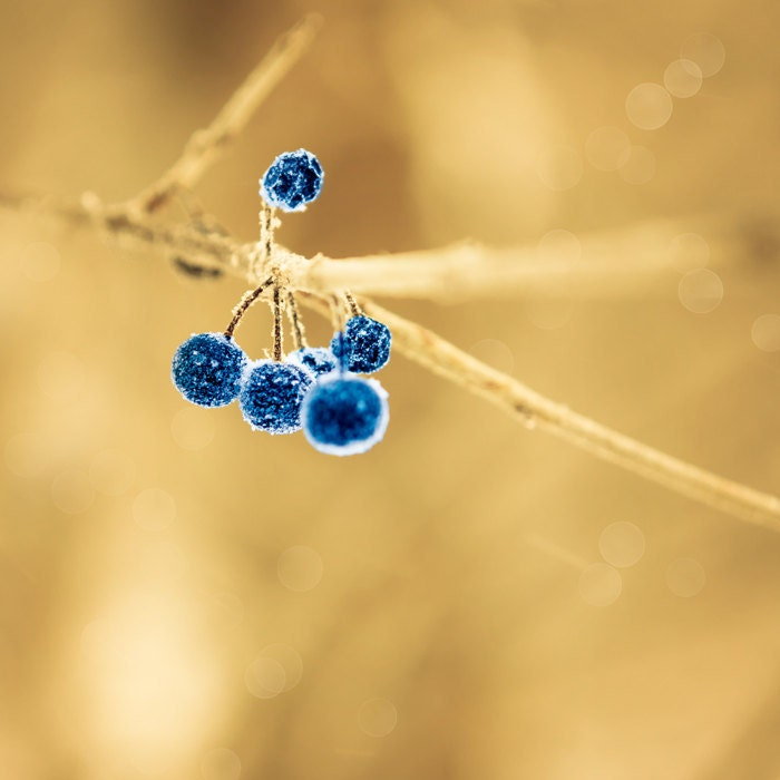 Image result for blue gold photography