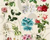 Collage Sheet More Flowers 77 You Will Get a Jpeg Sheet and Individual Png Images