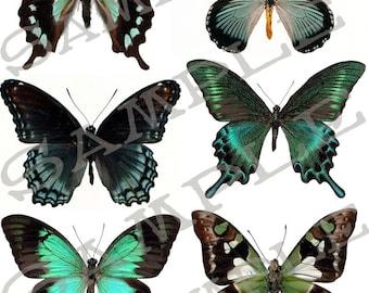 Butterfly collage sheet 4B Jpeg Sheet