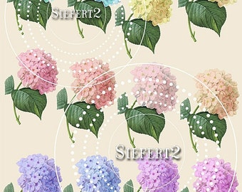 Flower of Many Colors Collage Sheet 1cfh Single PNG Images and Jpeg Sheet