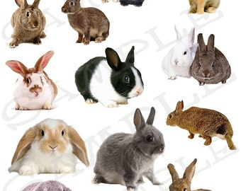 Bunny Rabbits Collage Sheet 11 You will get a Jpeg and individual Png images