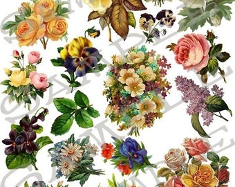 Beautiful Flowers Collage Sheet 1bf  You get a Jpeg Sheet and Individual Png Images