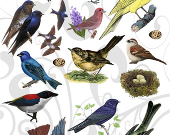 Birds In The Hood Collage Sheet 1 You Get A Jpeg Sheet and Individual Png Images