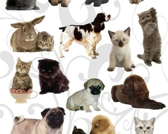 Cats Dogs and 1 Rabbit Collage Sheet You will Get a Jpeg Sheet As Well As Individual Png Images
