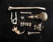 Death takes a lover - 8X10 photograph - found object arrangement - curated collection