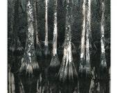 Cypress Trees, Florida