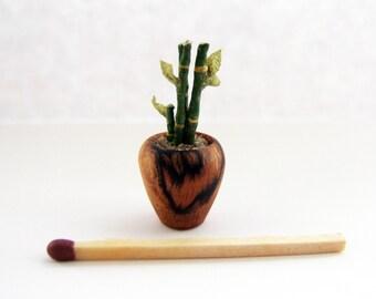 Miniature lucky bamboo