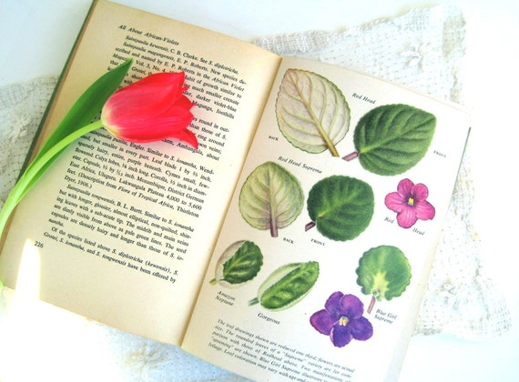 Vintage Garden Book All About African Violets 1950s