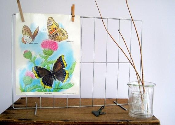 SALE Vintage Science Poster School Wall Chart Butterflies