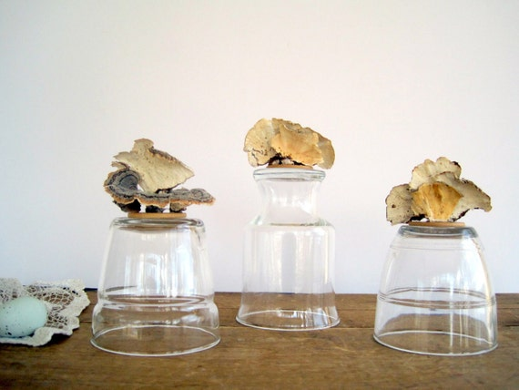 Reclaimed Vintage Glass Cloche with Woodland Lichens
