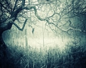 landscape photography woodland blue haunted ghostly home decor