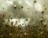 Winter Photograph, Snow print, queen annes lace, home decor, Fine Art Photograph