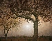 Tree photograph, surreal,  fairy print, Fine Art Photograph