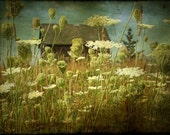 queen anne's lace nature photography landscape photography home decor field