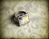 Rose Jewelry - White Rose - Photo Ring - original photography