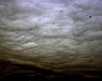 dark sky birds clouds nature photography fine art photography goth home decor home deco