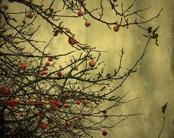 nature photography Autumn decor apple tree orchard green red apples home decor