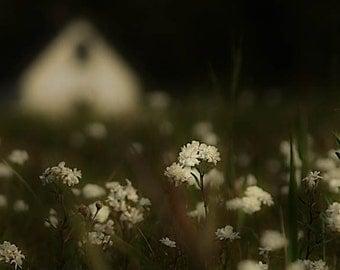 Field of flowers photograph, white house, home decor, Fine Art Photograph