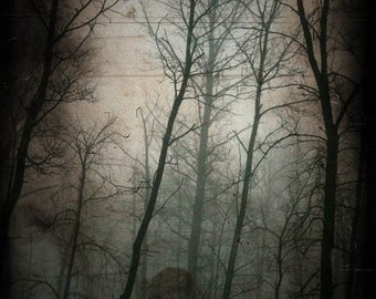 Woods photograph, haunted, goth, home decor, Fine Art Photograph