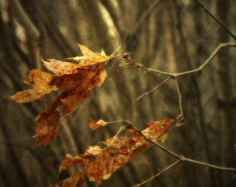 Autumn decor, leaf Photograph, leaf print, home decor, Fine Art Photograph