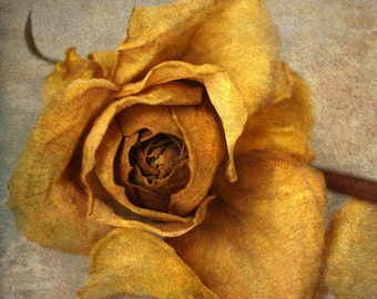 still life photography nature yellow rose nursery decor gallery wrap home decor botanical shabby chic
