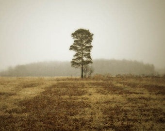 landscape photography solitary tree brown nature fine art photography