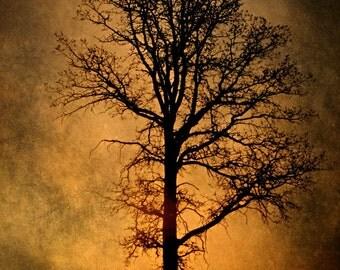 Tree Photograph, sunrise photo, home decor, Fine Art Photograph