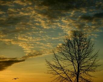 landscape photography sunrise yellow tree home decor fine art photography