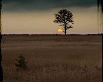 Sunset photograph, tree print, home decor,  Fine Art Photograph