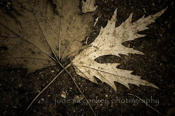 Items Similar To Nature Photography Leaves Fine Art