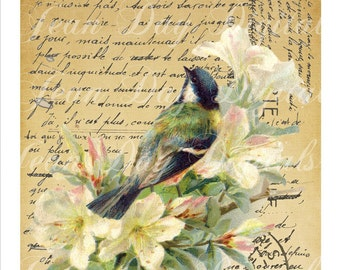 French Bird on Script - lovely colours, Large image - French Postcard Collage Sheet -Instant Download, Script TL002