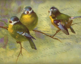 "Birds ""Chatting"", blue and yellow birds 1926, Spanish Postcard  Instant Download FrA088"