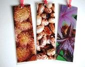 Castor Beans. Set of 3 Laminated Photo Bookmarks. Great Gift Idea.