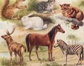 1910 Chart of Animal Orders Dogs Cats Horses Rodents Zebra Chromolithograph for Framing