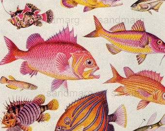 Vintage  Tropical Fish Double Sided Chart to Frame