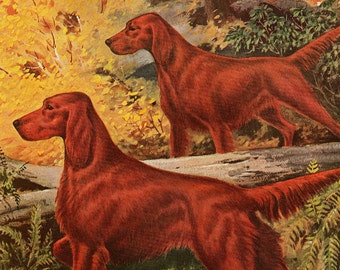 Vintage Dog Illustration Irish Setter Walter A Weber