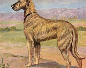 Vintage Dog Illustration Irish Wolfhound Hunting Print Edwin Megargee to Frame